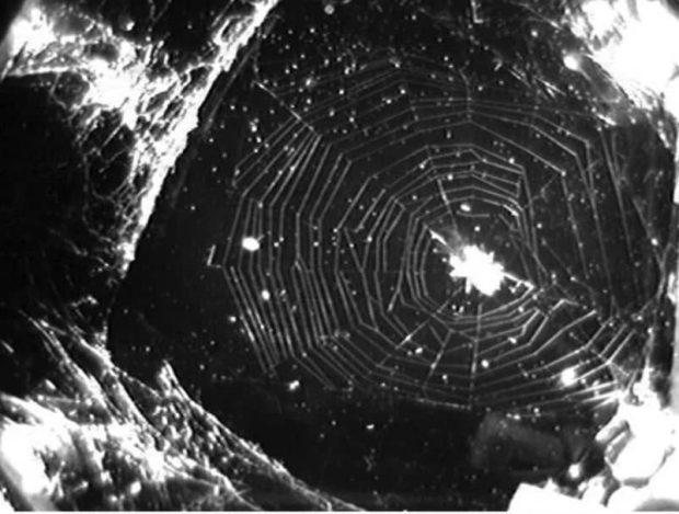 عنکبوت ها در فضا