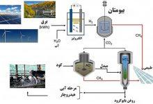 Photo of استخراج انرژی از کود دامی در دانشگاه کرنل